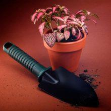 Evinizde Rahatlıkla Besleyebileceğiniz 11 Saksı Çiçeği